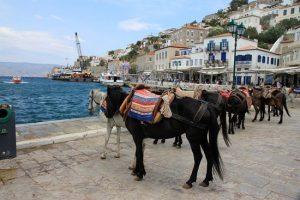 donkeys-islands